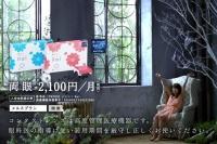 有村架純が出演する『2WEEKメニコン Rei』新CM「Rei用メルスプラン」篇