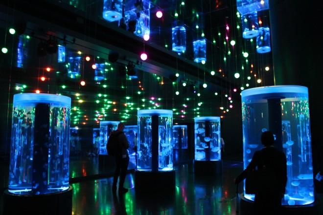 ゆらゆら漂うクラゲが音と光でつつまれる大空間「Jellyfish Ramble」