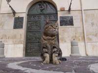 ドメニコ 場所:シチリア 『劇場版 岩合光昭の世界ネコ歩き コトラ家族と世界のいいコたち』