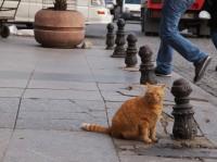 サフラン 場所:イスタンブール 『劇場版 岩合光昭の世界ネコ歩き コトラ家族と世界のいいコたち』