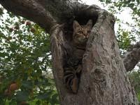 (コトラの子ネコ)リッキー 場所:青森県『劇場版 岩合光昭の世界ネコ歩き コトラ家族と世界のいいコたち』