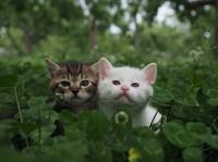 コトラの子ネコたち 場所:青森県 『劇場版 岩合光昭の世界ネコ歩き コトラ家族と世界のいいコたち』