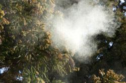 花粉の季節 布団の衛生管理は大丈夫?