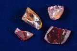 世界最古のきのこ化石・パラエオクラバリア