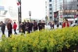 銀座・ソニービルに展示された約3000本の菜の花畑