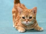 ネコの名前ランキング、1位は「モモ」