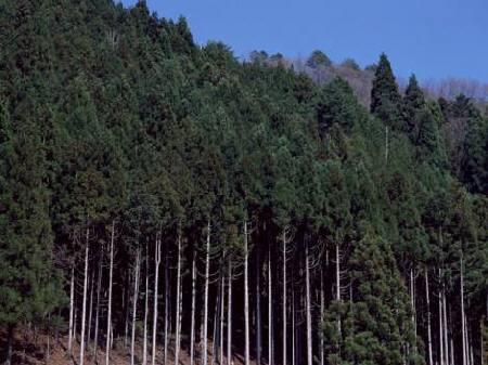 気象情報会社のウェザーニューズは13日(金)、東京都内の「本格的な花粉飛散シーズン突入」を発表した