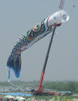 [Clickで巨大さ確認]埼玉加須ジャンボこいのぼり