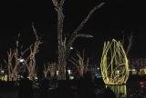 11年ぶりに復活した表参道のイルミネーション点灯式に近藤真彦が出席 (C)ORICON DD inc.