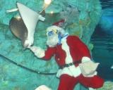 """""""丑""""から""""寅""""へ水中で『干支の引継ぎ式』が開催、この日はクリスマスということで""""サンタダイバー""""も登場した (C)ORICON DD inc."""