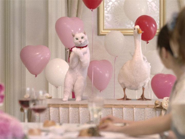 ネコとアヒルが華麗なダンスを披露/『アフラック』新CM