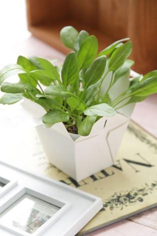 タキイ種苗とフランフランとの共同開発商品『Vege 栽培キット』第2弾商品「ミズナ 京ミゾレ」