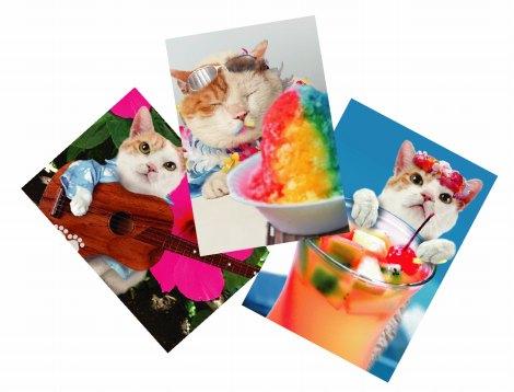 オリジナルポストカードが入手できる、ツイッター連動型の特別企画も用意