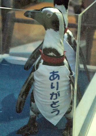 サンシャイン国際水族館の改装前最終営業日に「ありがとう」と書かれたベストを着用し来場者に別れを告げるペンギン【8月31日=東京・池袋】 (C)ORICON DD inc.