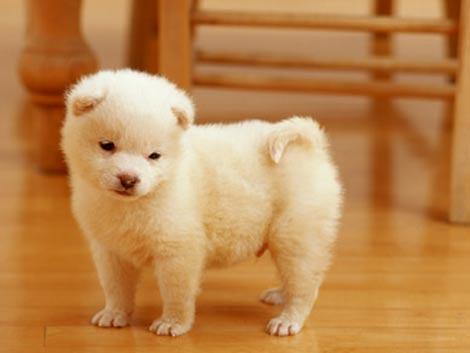 スイーツ系や自然派系など犬の名前も様々(※写真はイメージです)