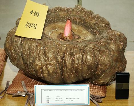 『群馬のこんにゃくは日本一だんべ! ジャンボこんにゃく生玉コンテスト』で横綱に選ばれた重さ23.65kg・周囲139cmのこんにゃく芋