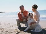 ソニー損保の調査によると、5人に1人が高齢ペットの介護を経験していた