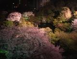 さまざまな桜が咲き乱れる春の八芳園、夜はライトアップも実施
