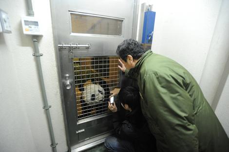 飼育室に入ったメスを上野動物園園長と中国の飼育担当者が注意深く観察
