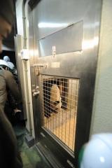 輸送箱から飼育室に入るメス