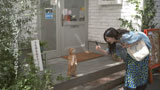 富士通『FMV』の新CMで二足立ち猫「こまちゃん」と共演する柴咲コウ