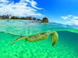 動物たちの素顔とハワイの鮮やかな光景に注目