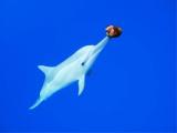 イルカのほかさまざまな動物たちが登場