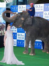 メス象・ランディとグリーンカーペットを歩き、大はしゃぎの土屋アンナ (C)ORICON DD inc.
