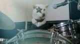ドラムを演奏するお父さん(犬のカイくん)