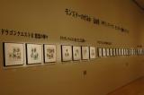 テレビゲーム史上初の本格的展覧会『ドラゴンクエスト展』、第2章「導かれし記憶」に展示されている鳥山明氏の原画 (C)ORICON DD inc.