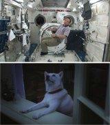 『白戸家』新CMシリーズに出演する宇宙飛行士・古川聡氏(上段)と、夜空を見上げるお父さん(犬のカイくん/下段)