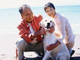 ペット関連市場は犬や猫の高齢化やアレルギーなどをうけ食事療法食が伸びてきている