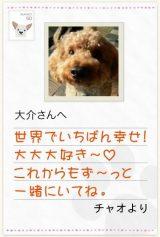 """診断結果は""""愛犬からの手紙""""風に表示"""