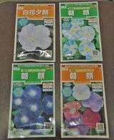 開花時期の異なる日本アサガオと西洋アサガオ、開花する時間帯が異なるアサガオとヒルガオ(ヨルガオ)を組み合わせるのもオススメだ(C)ORICON DD inc.