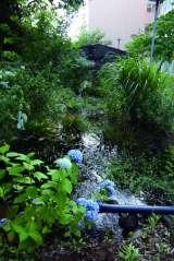 キャンパス内にあるホタルが集うための水辺「ホタルのビオトープ 〜ひかりのせせらぎ〜」