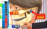人間は通常、上下の歯を離している状態になっている