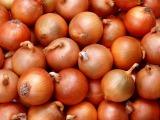 ハウス食品と広島大学の共同研究で、タマネギエキスの継続摂取が食後の血管内皮機能改善に役立つことが確認された