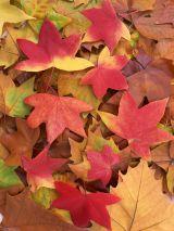 ダイエットに向いている季節は、夏ではなく秋。その理由は副交感神経!?