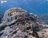 Googleストリートビューが海中にも! オーストラリア ヘロン島ではウミガメが確認できる