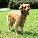 熱中症の要因として、「散歩中・ドッグラン」が半数近くを占める。飼い主は十分な対策を取らなければいけない。