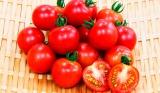 カゴメが開発した自社開発の家庭菜園用ミニトマト苗が3月下旬より全国で発売(写真は『ちいさなももこ』)