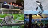 """動物園の""""ナイトイベント""""が、今年も各地で開催(8月9日=東京・恩賜上野動物園)"""