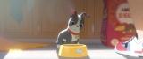 12月20日公開のディズニー・アニメ映画『ベイマックス』と同時上映される短編『愛犬とごちそう』特別映像解禁(C) 2014 Disney. All Rights Reserved.