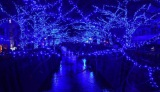 土日の点灯中止が発表された中目黒(東京・目黒区)目黒川沿いで展開されている初のイルミネーション「Nakameguro 青の洞窟」