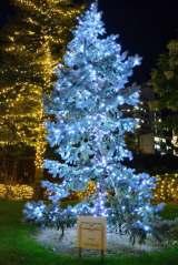 『ミッドタウン・クリスマス2014』(東京ミッドタウン)(C)oricon ME inc.