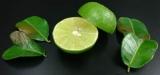 タイ伝統の本格ハーブで蒸しマッサージ『ハーブボール タイエステL』(オープン価格/紀陽除虫菊) 成分 コブミカン果皮
