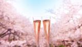 今年も3月初旬より開催! 桜の名所でオーストラリアのプレミアム スパークリングワイン『シャンドン ロゼ』を楽しめる「お花見CHANDON」イメージ