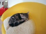 """2月22日は""""猫の日""""♪"""