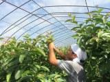 『天海のしずくオーガニックローション(化粧水)』 社員が種選びや土づくりなど、こだわりをもって栽培
