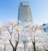 東京ミッドタウンでは「Midtown Blossom 2015(ミッドタウン・ブロッサム2015)」(3月20日〜4月19日)を開催